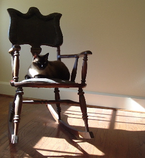 Dinah in the chair in the sun