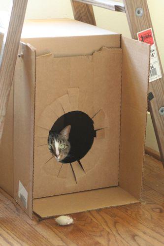 sneaky box