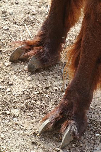 alpaca feet