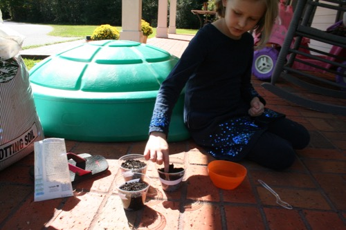 Six seeds in each pot!