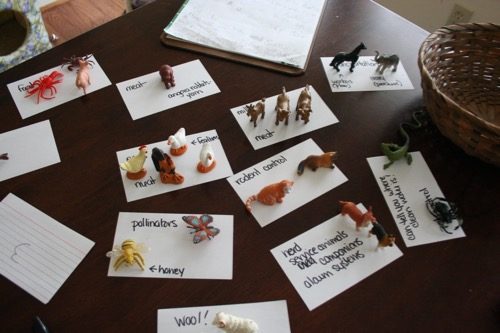 Science Last Week: How people use animals.  (fiber animals included)
