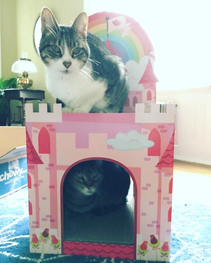 Cats in a cardboard castle